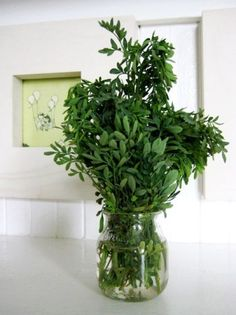 Use the herb rue to keep fruit flies away!