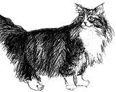 long haired cat charcoal print