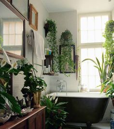 baths, bathing, hanging plants, dream bathrooms, tub, jungl, hous, garden, wood frames