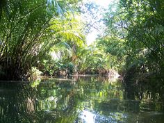 Cruising inside the Mangrove Forest of Jailolo. Stunning!
