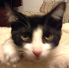 "Sassy Pants...my own ""Grumpy Cat"""