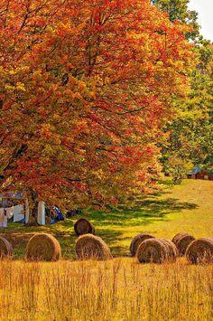 Autumn In West Virginia -