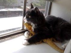 kitten! loves! bearded dragon!!!!