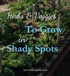 shade check, shades, shade vegetable garden, herb veget, garden idea