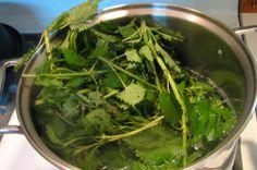 Prirodni lijekovi - Ljekovito bilje, Zdrava ishrana, Mršavljenje: Sirup od koprive je najbolji lijek za čišćenje krvi