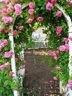rose pergolas