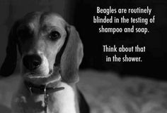 Blog the Change – #StopAnimalTesting   Wag 'N Woof Pets anim cruelti, animals, anim test, beauty products, beagles, cruelti free, dog, animal free testing products, shampoo
