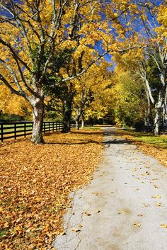 Image detail for -Beautiful Kentucky Autumn Wallpapers | Genuine Kentucky