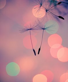 pastel, dream, color, seed, background, poster, light, flower, summer romance