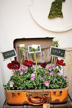 Love this idea! Plants in vintage suitcase. Must do.