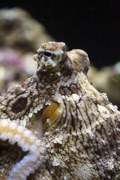 octopus eye, Waikiki, HI octopus eye