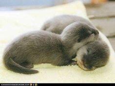 little otter babies. So cute!