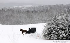 An Amish Buggy makes its way through the snow.    Paul Cyr Photography:  http://www.crownofmaine.com/paulcyr/categories/index.php?tag=Amish