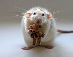 70 animals to put you in a good mood!