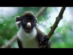 lol British animal voiceovers