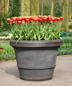 Do this in the fall. Spring bulbs in Pots | My Favorite Things