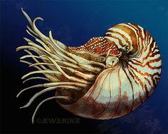 aquat art, anim, nautilus art, art prints, fine art, brown cream, beauti shell, blues, cephalopod