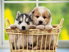 animals, pet photography, puppies, dogs, animal quotes, pets, wallpapers, baskets, friend