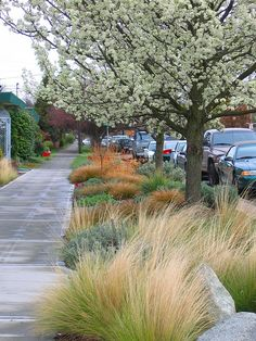 Nassella Tenuissima, Bronze Carex, Hellstrip planting By lifebegreen (March 21, 2007)