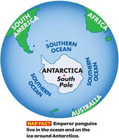 Scholastic video of Emperor penguins. Great video!
