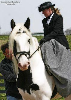 Drum Horse Stallion Chalk Talk