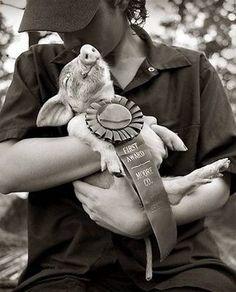 1st place piggy