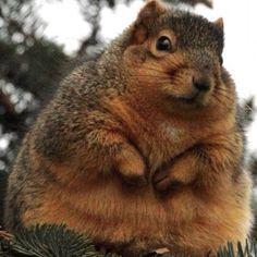 Squirrel!  ahhh chunker