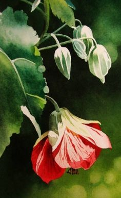 Chinese Lantern, painting by artist Jacqueline Gnott