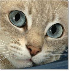 Look at those eyes......