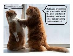 funny animals, funny cats, funni, funny quotes, funny photos