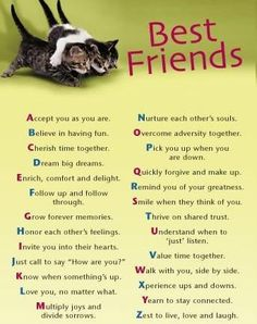 life quotes, friend quotes, cat, bff, funny quotes, alphabet, friendship quotes, besti, friend sayings
