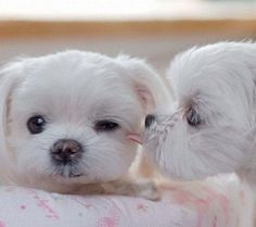 Puppies in love.
