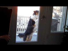 Gus opening the door.