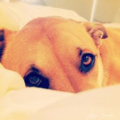 good morning sunshine #dogs #cute  A Healthy Dog is a Happy Dog / www.PetWellbeing.org