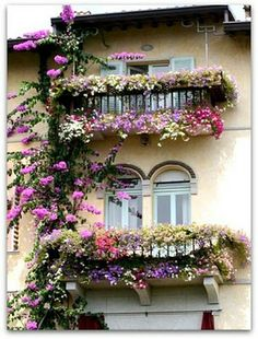 Wow, talk about window boxes!