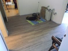 Dream Click Pro Berry Alok Belgium in Rehovot 100% Water resistant laminate floor   פרקט פולימרי דרים קליק פרו של ברי אלוק בלגיה ברחובות  יורם פרקט מכירה והתקנה טל: 050-9911998 http://yoramparquet.colors.co.il/