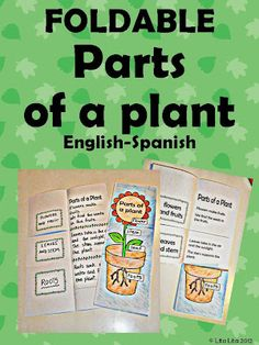 parts of a plant. Printable foldable in English and Spanish