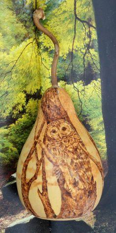 Barred Owl Pyrography Wood burning on Dried Gourd by - DriedDecor.com gourd art, dri gourd, bar owl, woodburn