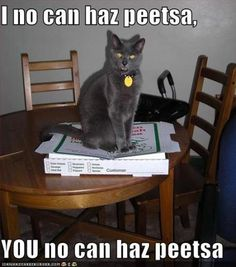 Google Image Result for http://www.starling-fitness.com/wp-content/uploads/cat-cant-have-pizza.jpg