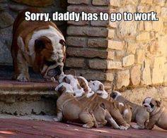 It's a struggle every Monday to leave them at home! #dogs #ilovemydog