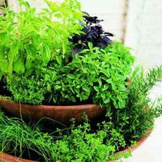 Plant a pretty and space-saving two-tier herb garden to keep by the back door. Fill two containers—one 8 inches wider than the other—with soil. Place the smaller pot on top of the larger one, and add herbs. | Photo: Thomas J. Story
