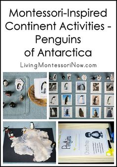 Hands-on penguin activities identifying the penguins of Antarctica and identifying some penguins from around the world