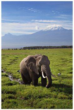 Mt. Kilimanjaro, Kenya, Africa.
