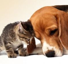 Home remedies for dogs & cats