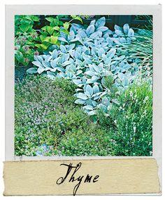 Growing Your Own Herb Garden  http://laurieannas.blogspot.com/