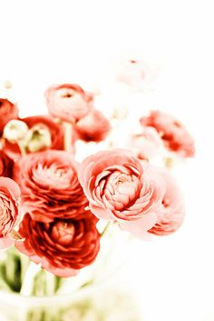 summer flowers, rose, ranunculus, color, pink, bloom, beauti, pretti, floral