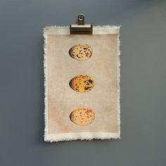 Speckled bird eggs canvas print
