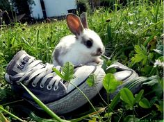 even the bunny loves converse by ~K-win  Photography / Animals, Plants & Nature / Wild Animals
