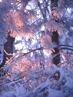 Sunlight shining through hoar frost