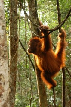 SAY NO TO PALM OIL